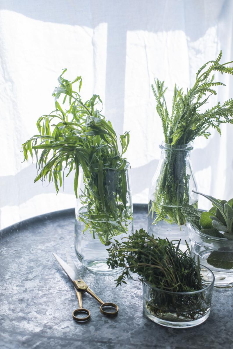 14-herbs.jpg